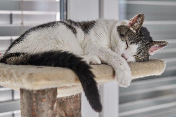 habitat chat arbre